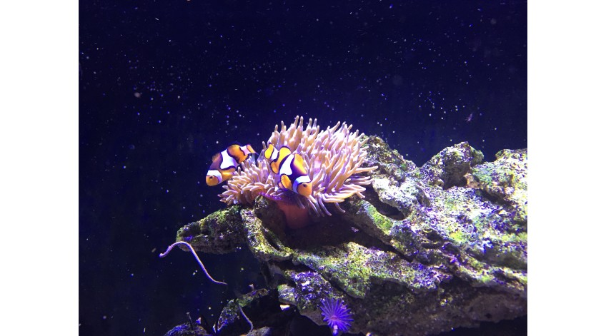 How to set up a nano reef aquarium