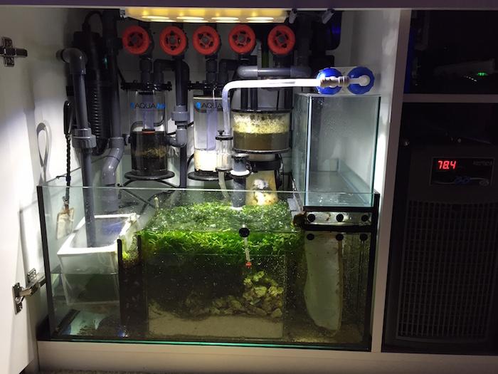 Red Sea Reefer Clean Sump Setup